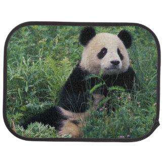 Giant panda in the grass, Wolong Valley, Sichuan Car Mat