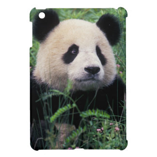 Giant panda in the grass, Wolong Valley, Sichuan Cover For The iPad Mini
