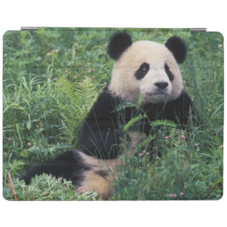 Giant panda in the grass, Wolong Valley, Sichuan iPad Cover