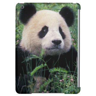 Giant panda in the grass, Wolong Valley, Sichuan iPad Air Case