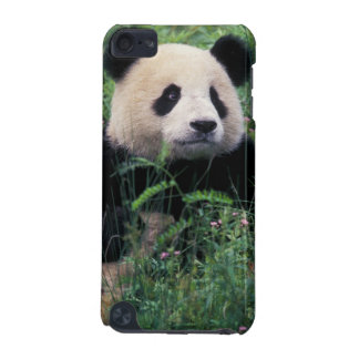 Giant panda in the grass, Wolong Valley, Sichuan iPod Touch 5G Covers