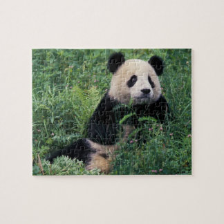 Giant panda in the grass, Wolong Valley, Sichuan Jigsaw Puzzle