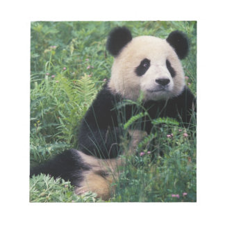 Giant panda in the grass, Wolong Valley, Sichuan Notepad