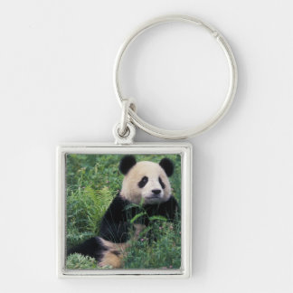 Giant panda in the grass, Wolong Valley, Sichuan Silver-Colored Square Key Ring