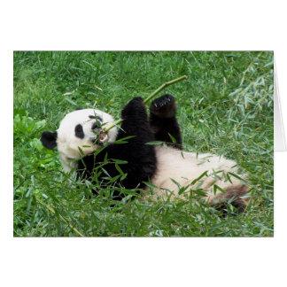 Giant Panda Lounging Eating Bamboo Greeting Card