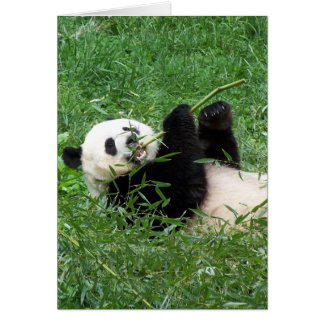Giant Panda Lounging Eating Bamboo Greeting Card