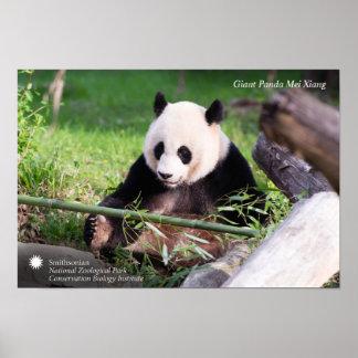 Giant Panda Mei Xiang Poster