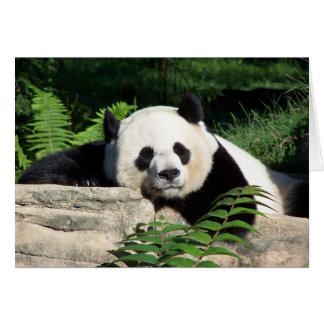 Giant Panda Napping Greeting Card