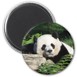 Giant Panda Napping Magnet