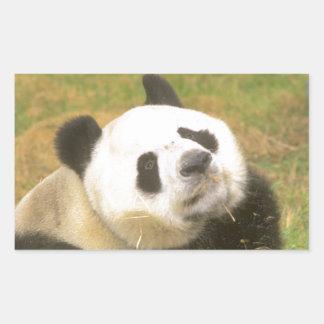 Giant Panda Rectangular Sticker
