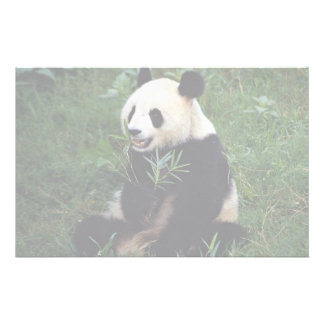 Giant panda, Sichuan Province, China Custom Stationery