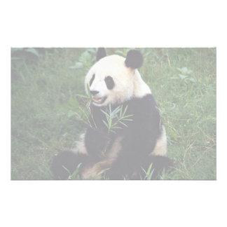Giant panda, Sichuan Province, China Stationery