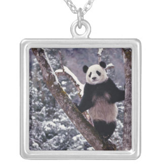 Giant Panda standing on tree, Wolong, Sichuan, Silver Plated Necklace