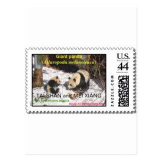 Giant panda Tai Shan and Mei Xiang Washington DC Postcard