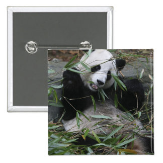 Giant pandas at the Giant Panda Protection & 2 15 Cm Square Badge