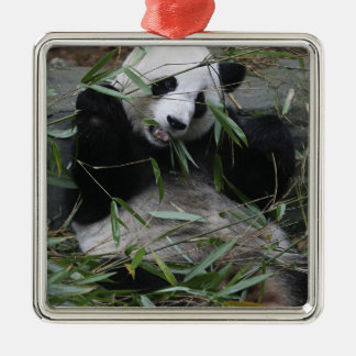 Giant pandas at the Giant Panda Protection & 2 Christmas Ornament