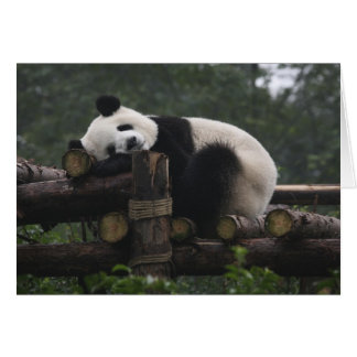 Giant pandas at the Giant Panda Protection & 3 Greeting Card