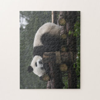 Giant pandas at the Giant Panda Protection & 3 Jigsaw Puzzle