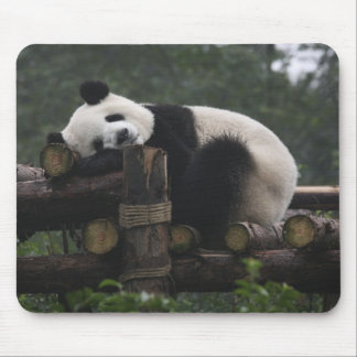 Giant pandas at the Giant Panda Protection & 3 Mouse Mat