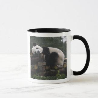 Giant pandas at the Giant Panda Protection & 3 Mug