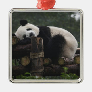 Giant pandas at the Giant Panda Protection & 3 Silver-Colored Square Decoration