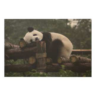 Giant pandas at the Giant Panda Protection & 3 Wood Prints