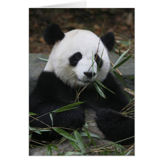 Giant pandas at the Giant Panda Protection & Greeting Card