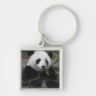 Giant pandas at the Giant Panda Protection & Keychains