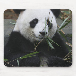 Giant pandas at the Giant Panda Protection & Mouse Mat