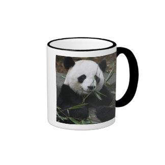Giant pandas at the Giant Panda Protection & Coffee Mugs