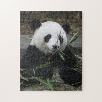 Giant pandas at the Giant Panda Protection Puzzles
