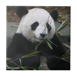 Giant pandas at the Giant Panda Protection Tile