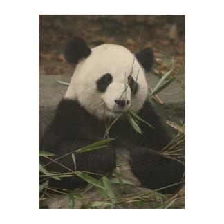 Giant pandas at the Giant Panda Protection Wood Print