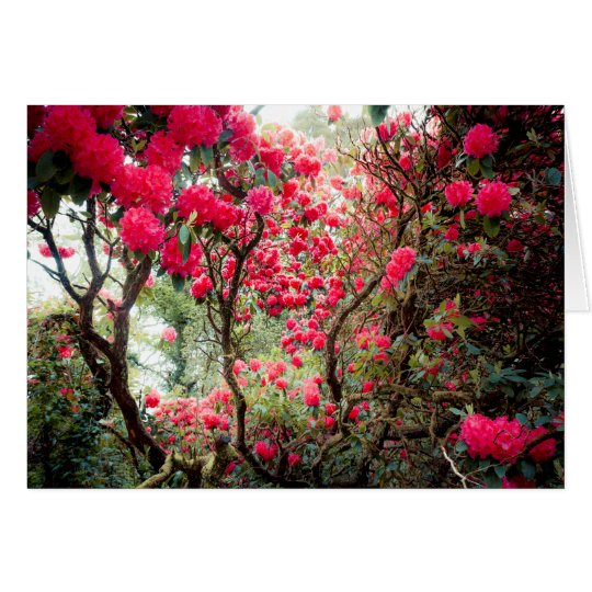 Giant Rhododendron Card