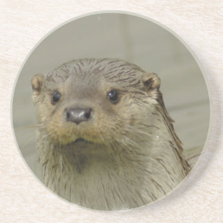 Giant River Otter  Coaster