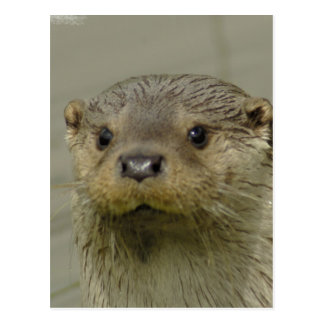 Giant River Otter Postcard