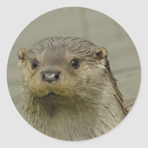 Giant River Otter Stickers