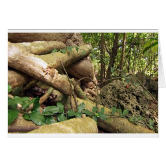 Giant root trees from Zanzibar island Greeting Card