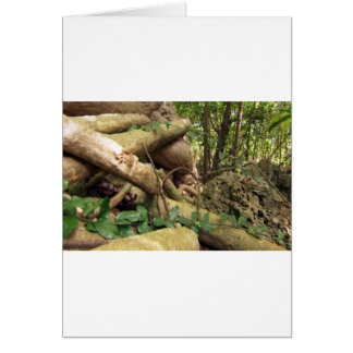 Giant root trees from Zanzibar island Greeting Card