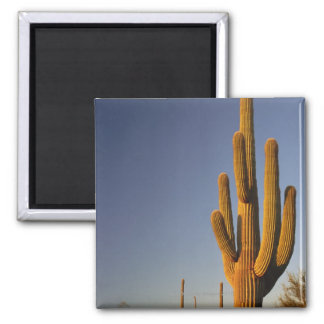 Giant Seguaro Cactus, Organ Pipe Nat'l. Magnet