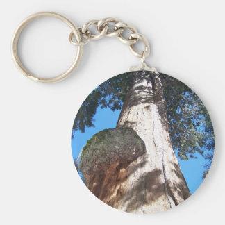 Giant Seqouia Basic Round Button Key Ring