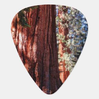 Giant Sequoia Guitar Pick