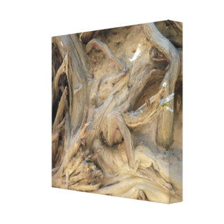 Giant Sequoia Tree Roots Photograph Stretched Canvas Prints