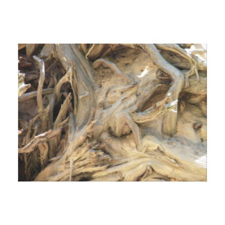 Giant Sequoia Tree Roots Photograph Large Canvas Prints