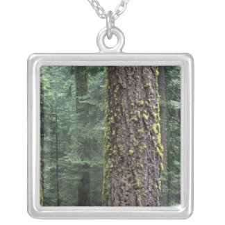 Giant Sequoia trees in the forest, Sequoia and Silver Plated Necklace