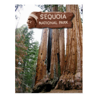 Giant Sequoia trees Sequoia National Park CA Postcard