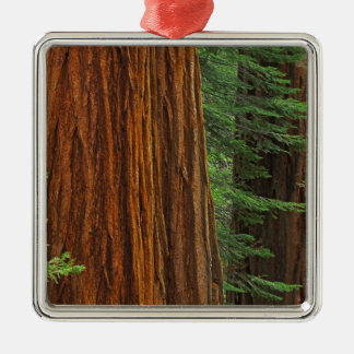 Giant Sequoia trunks in forest, Yosemite Christmas Ornament
