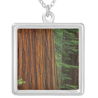 Giant Sequoia trunks in forest, Yosemite Silver Plated Necklace