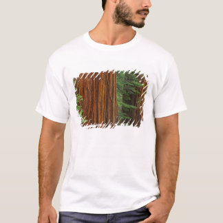 Giant Sequoia trunks in forest, Yosemite T-Shirt