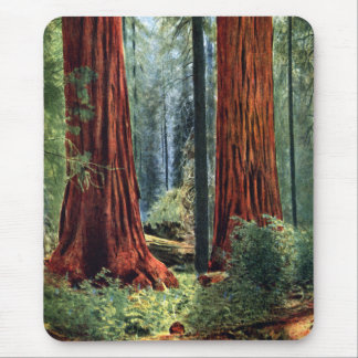 Giant Sequoia Trunks Mouse Pad